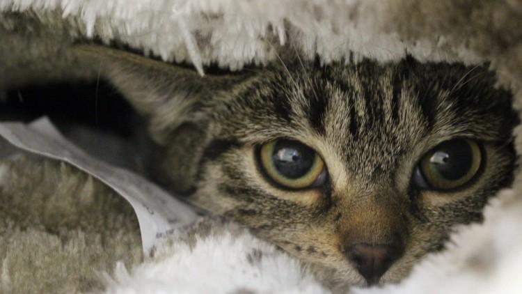 Saga i Alma – kotki z szarego podwórka