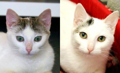 Lukrecja i Lobelia– zwykła historia zwykłych kotów