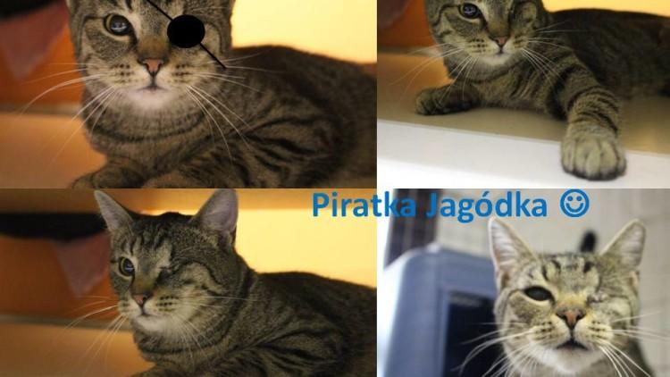 Piratka Jagódka