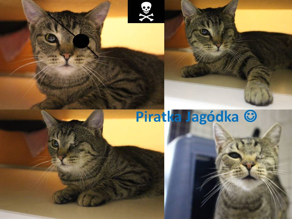 Piratka Jagódka