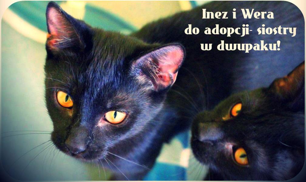 Inez i Wera polecają się do adopcji