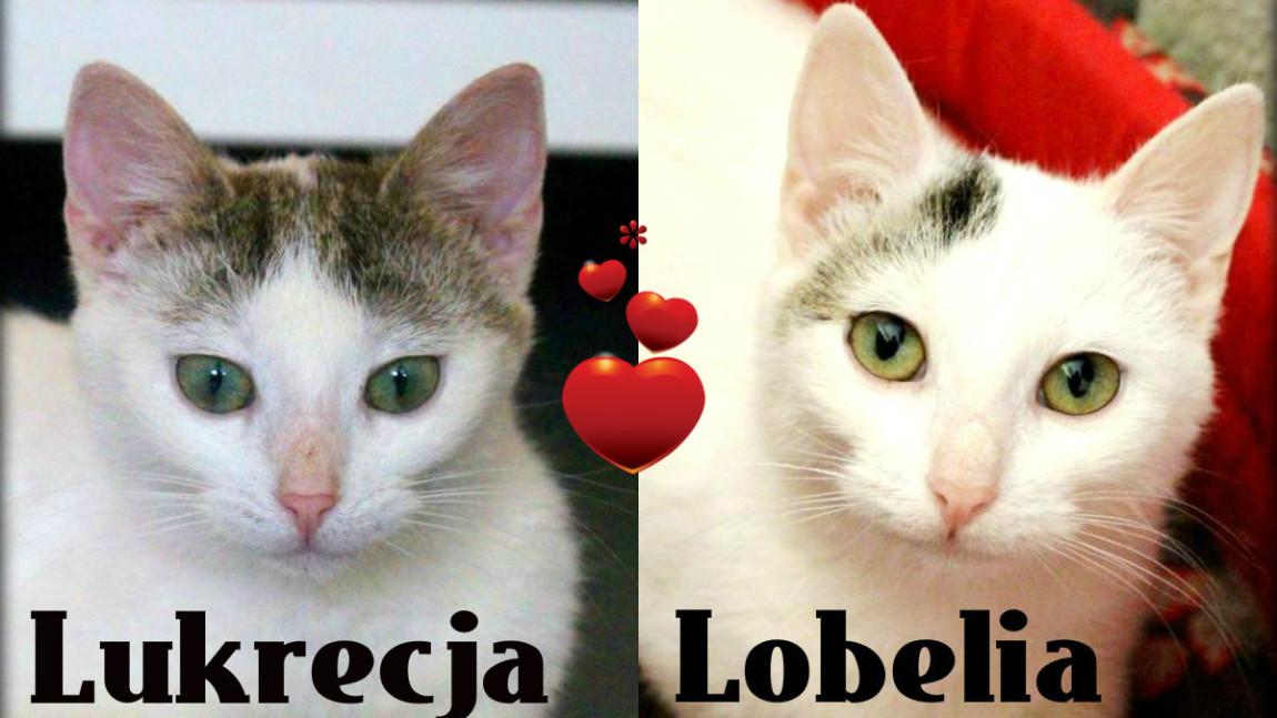 Lukrecja i Lobelia polecają się do adopcji