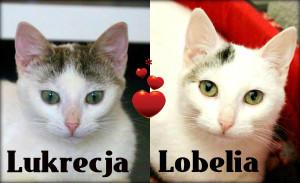 Lukrecja-I-Lobelja-na-główne-1