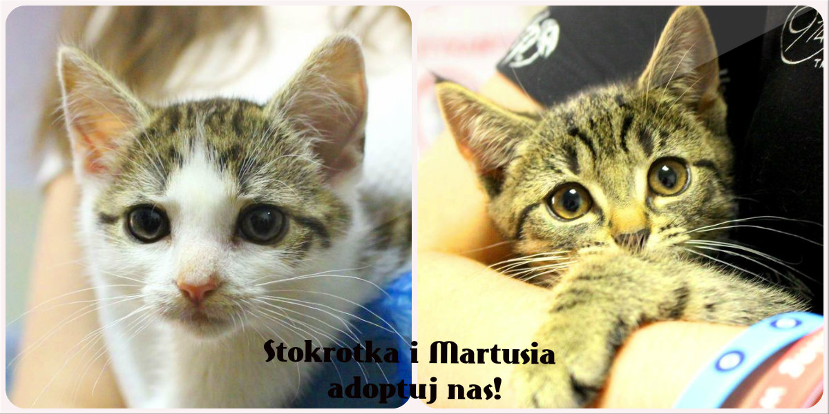 Martusia i Stokrotka polecają się do adopcji