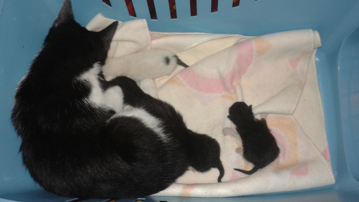 Kocia rodzinka z komórki.