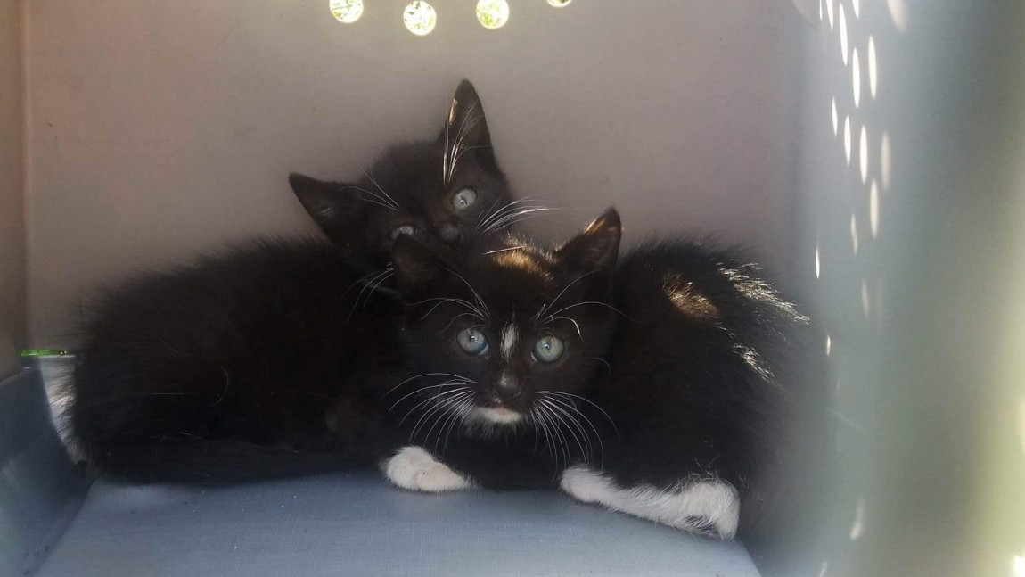 Kociaki z pętli tramwajowej