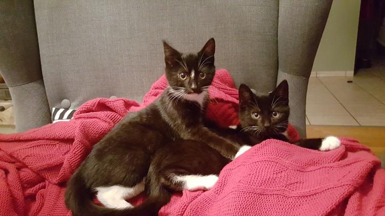 Tadzio i Gabryś pozdrawiają i polecają się do adopcji