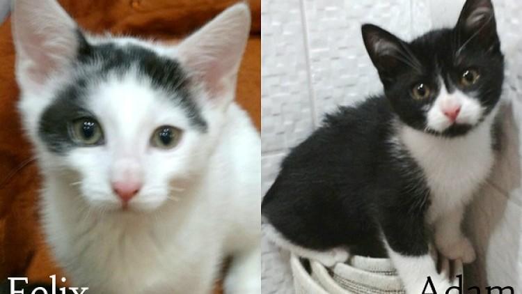 Adam i Felix polecają się do adopcji ;)