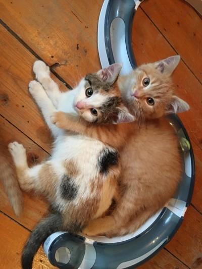 Loya i Dila w domku!