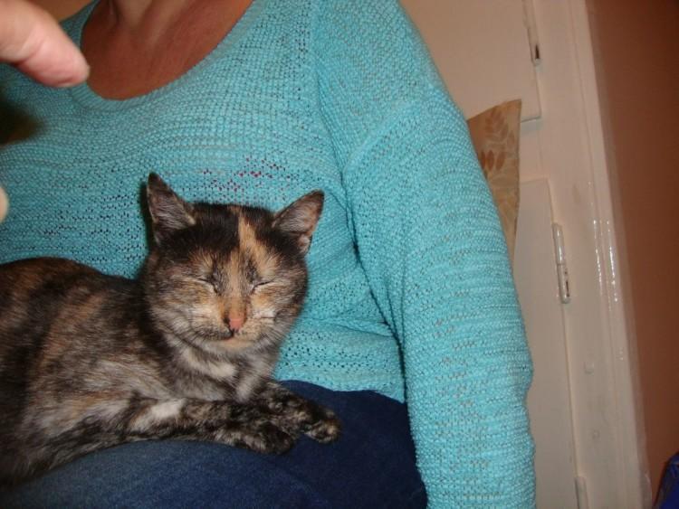koty do adopcji 020