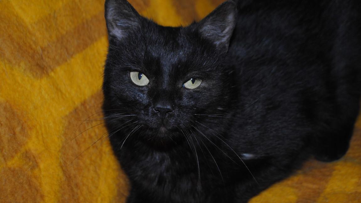 Koci rozbójnik Rumcajs w domku