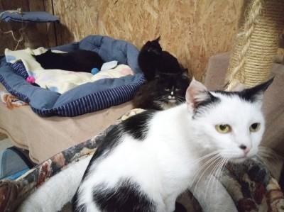 Koty Pani Aliny- jak się mają?