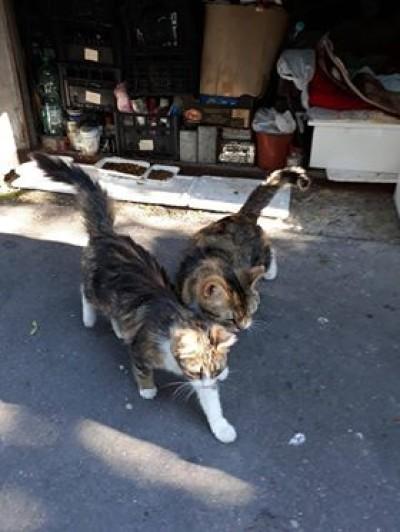 Dwie kotki wyrzucone na ulicę – ogłoszenie grzecznościowe