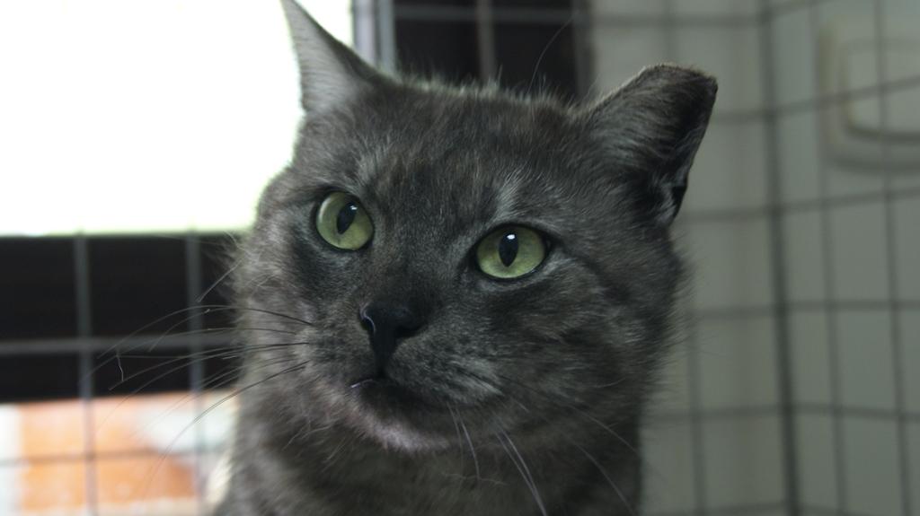 Ester – kotka z ulicy.