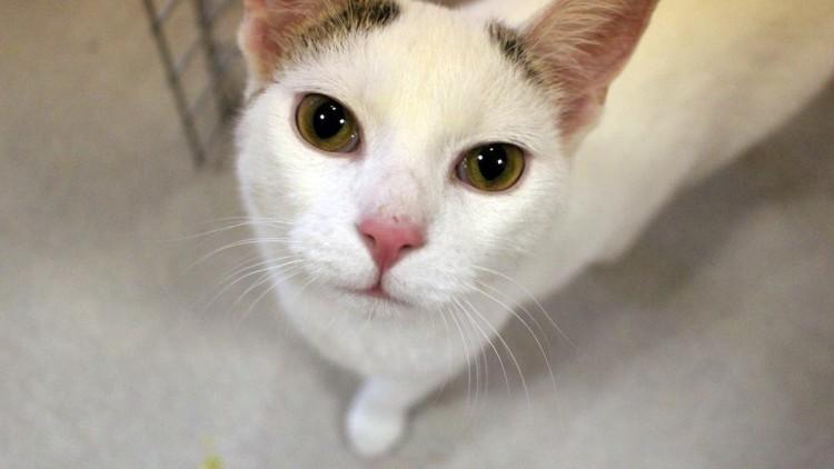 Tazo wrócił z adopcji i znów szuka domu