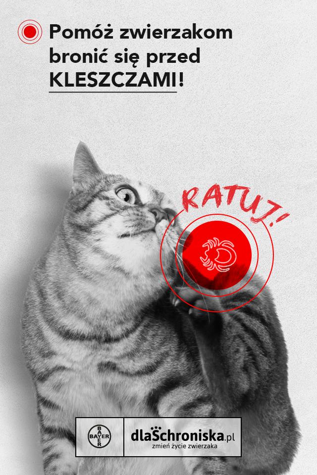 akcja-RATUJ-post-FB-kotek kopia