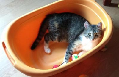 [Ogłoszenie grzecznościowe] Kociczka szuka domu