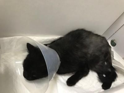 Nina – kotka z wypadku.