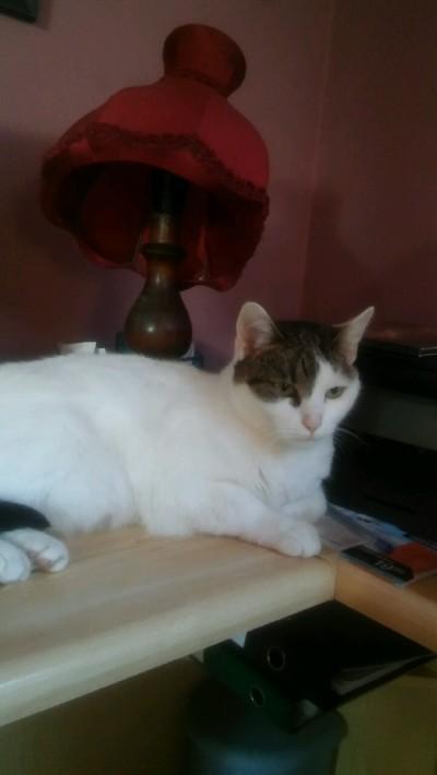 [Ogłoszenie grzecznościowe]3 koty szukają pilnie domu