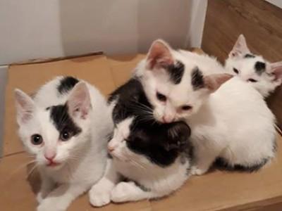 [Ogłoszenie grzecznościowe] Kocie dzieciaki