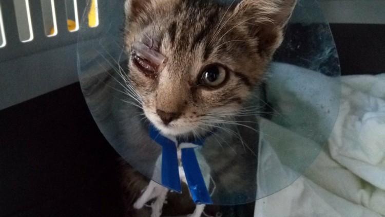 Chester – aktualizacja stanu zdrowia