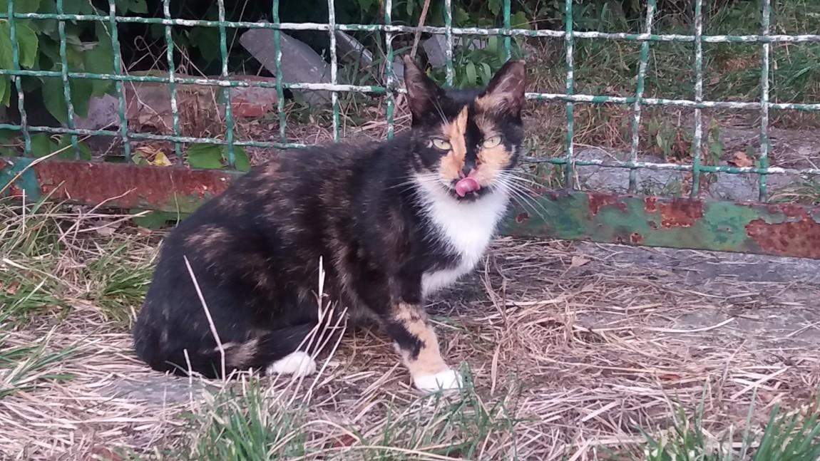 Muffinka i Tiffany – kotki ze Stoków