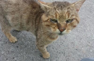 [Ogłoszenie grzecznościowe] Tygrysek z Nowego Targu