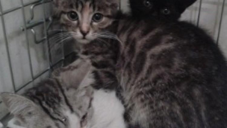 [Ogłoszenie grzecznościowe] Fantastyczna 4 – kociaki z szopy