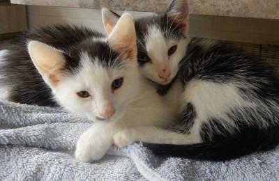 [Ogłoszenie grzecznościowe] Kociaki ze zsypu