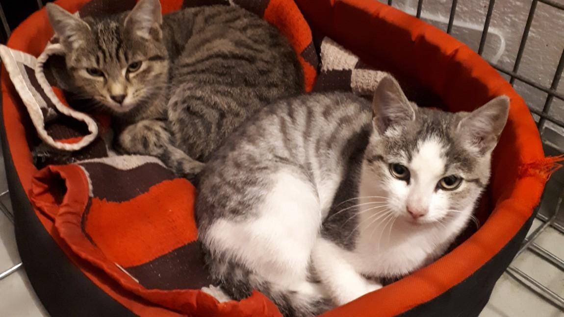 [Ogłoszenie grzecznościowe] 2 porzucone kotki