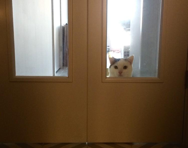 Lucky drzwi