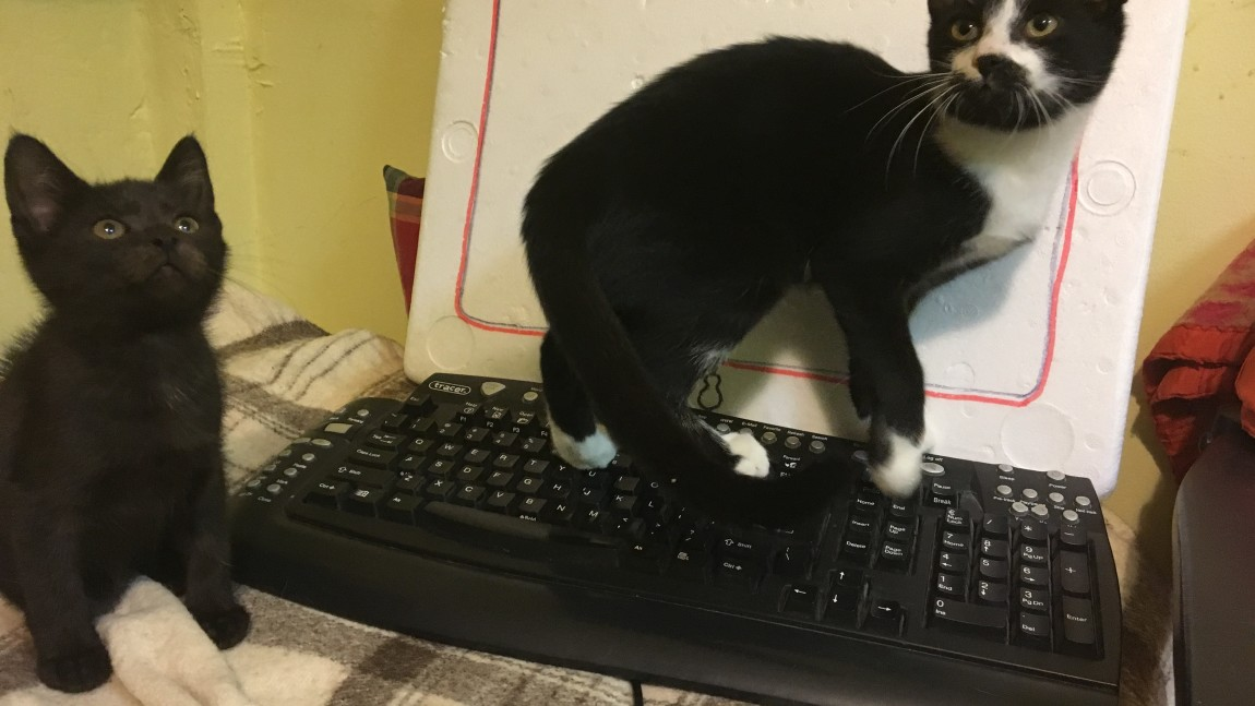 Prośba o laptopa