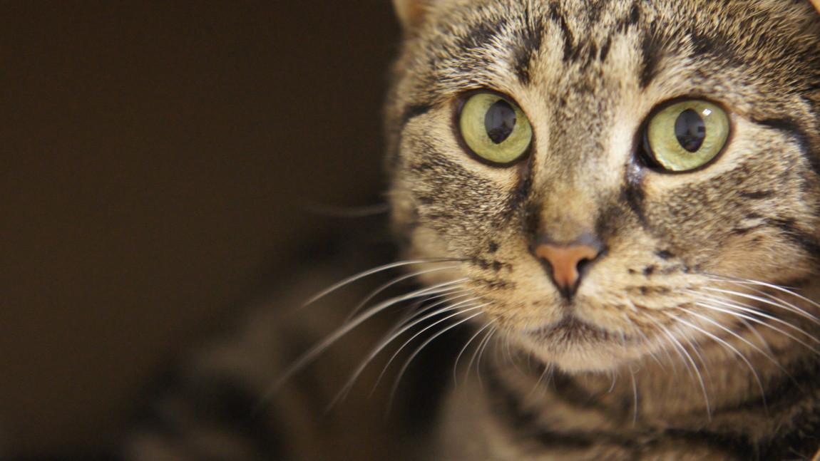 Celinka – śliczna kocia laleczka