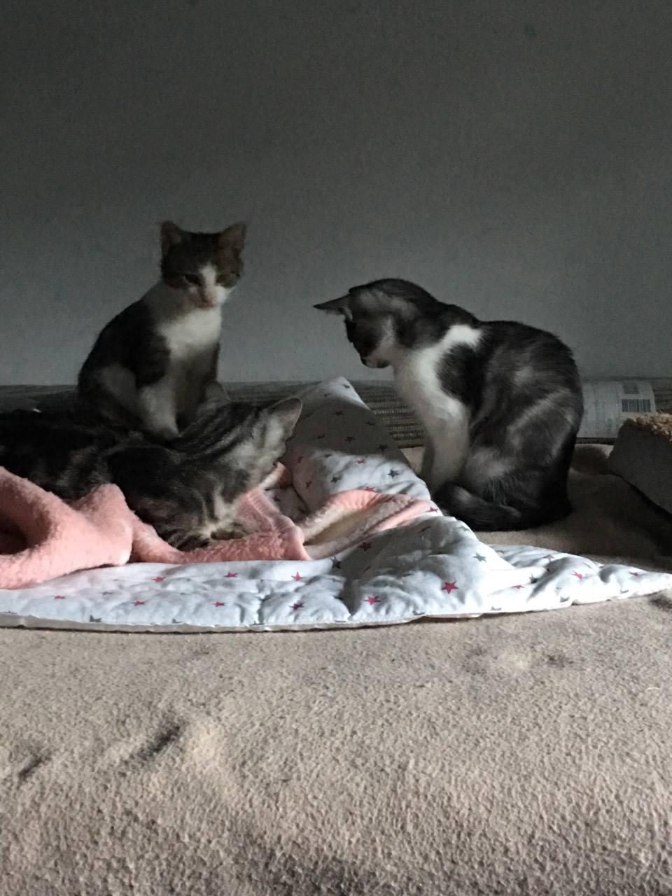 [Ogłoszenie grzecznościowe] Kocia mama z małymi