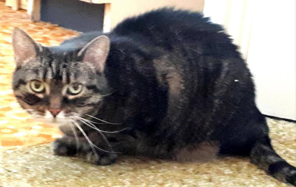 [Ogłoszenie grzecznościowe] Kocia seniorka poszukuje domu.