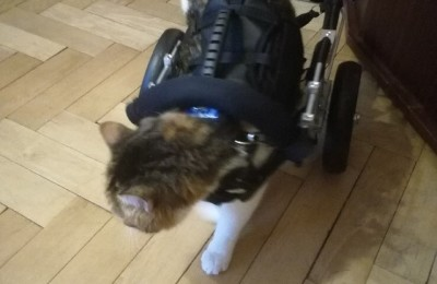 Lusia i jej wózeczek