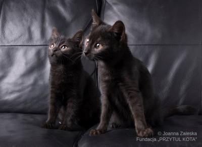 Kociaki z asfaltówki