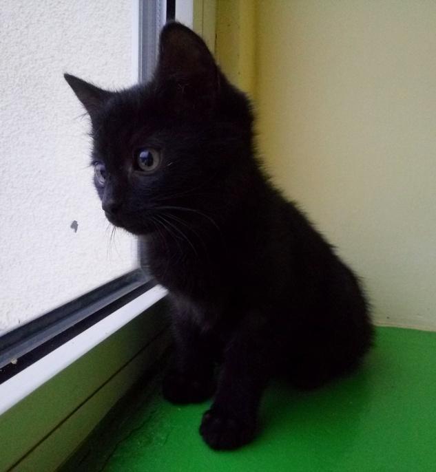 Kociaki trzy – wszystkie w domkach