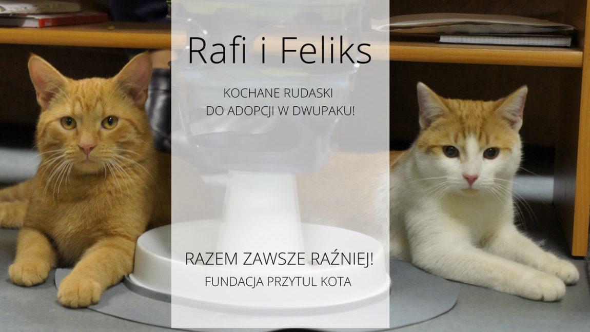 Rafi i Felix w domku!
