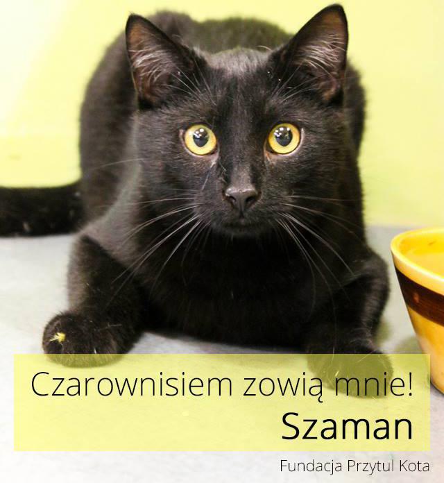 Czarowniś Szaman już w domu!