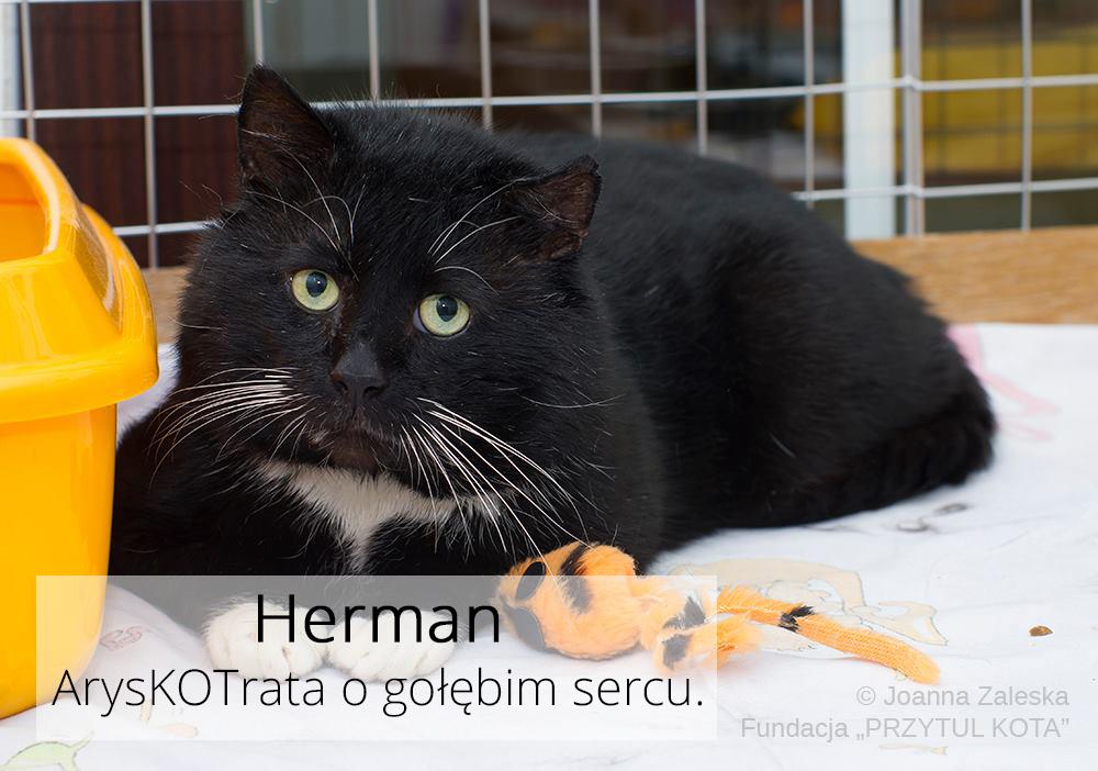 Jego Wysokość Herman pojechał do domu!