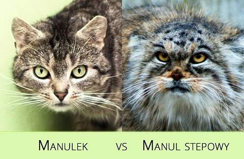 Manulek