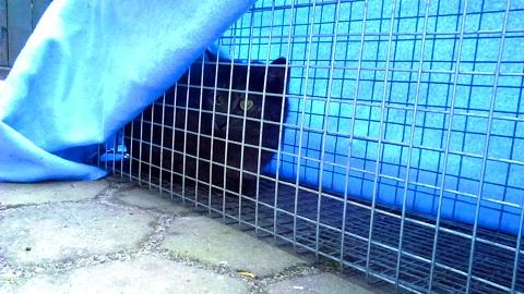 Akcja łapania wolno żyjącej kotki i jej kociąt!