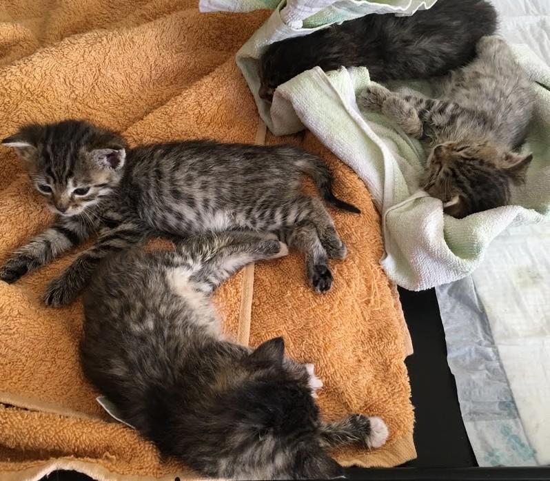 Kitteny z Ozorkowa