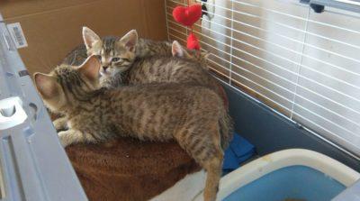 Kocie ziółka w domkach!