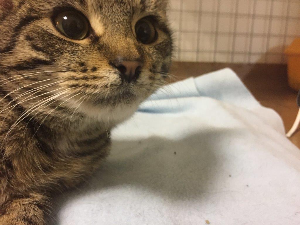 Bienia – kolejne złamane kocie serduszko