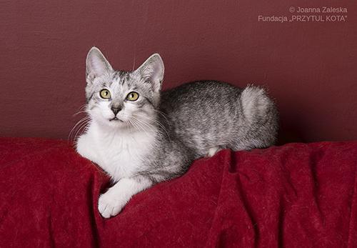Szarik – zimowy kotek