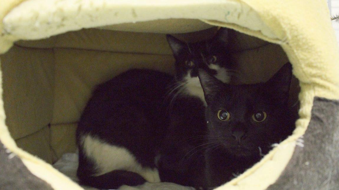 Siostrzyczki Piper i Phoebe