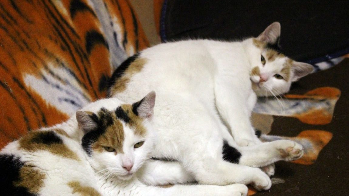 Scarla i Lilu znalazły domek :)