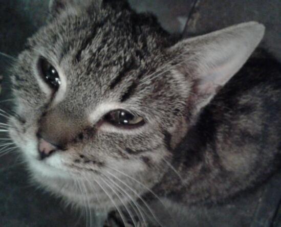 Koty spod Radomia potrzebują Waszej pomocy!